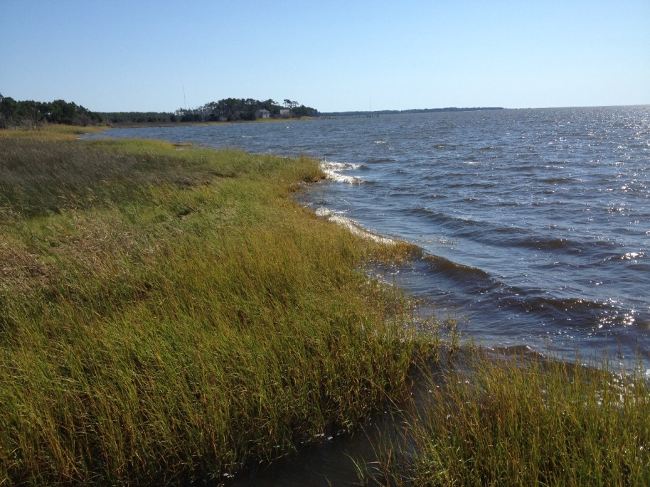 App Offers Guidance on Living Shorelines