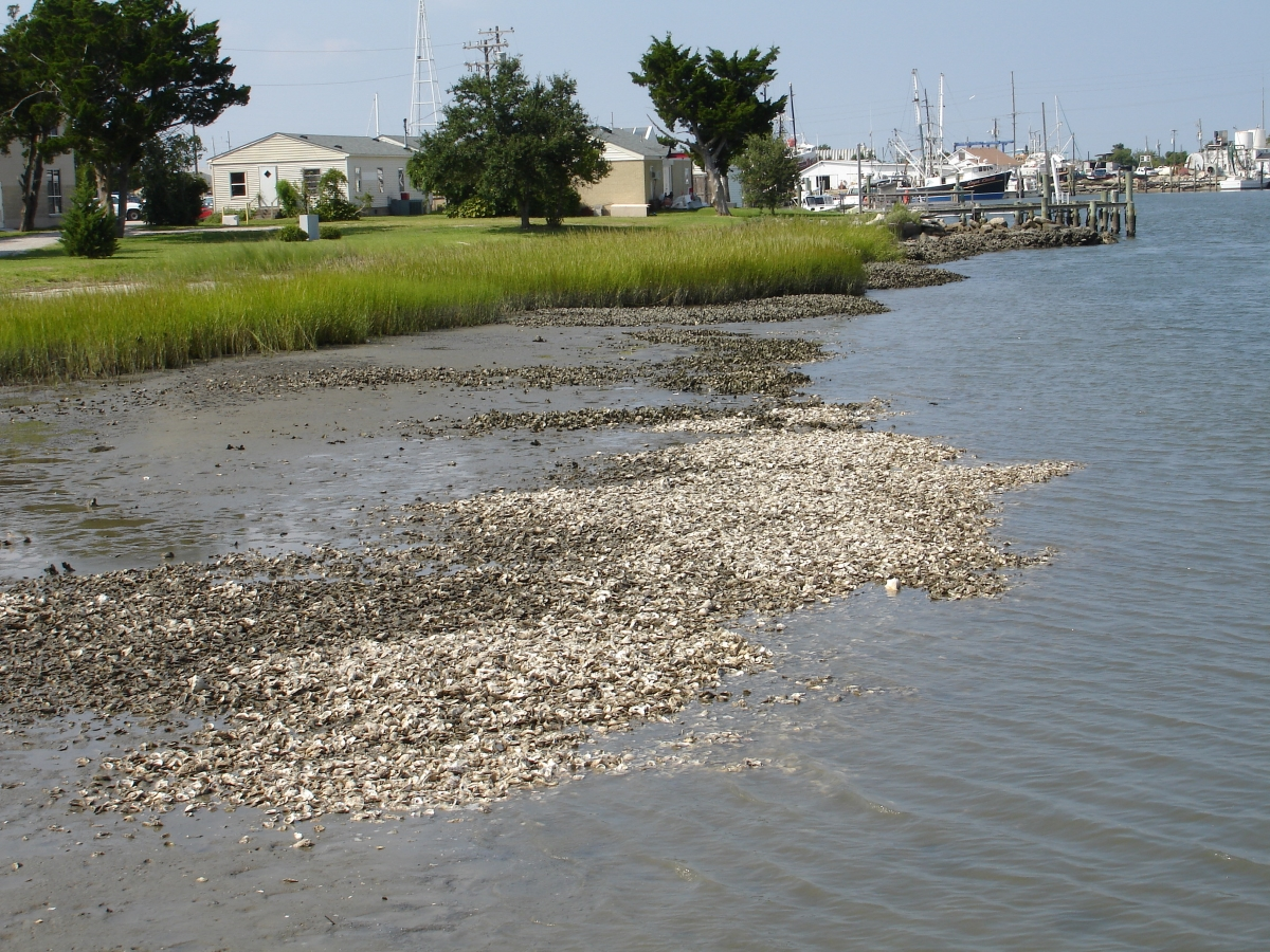 NEW North Carolina's Living Shorelines application